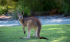 cropped-Baby_roo-3-scaled-1
